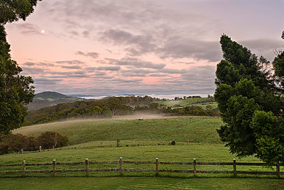 Australia, New South Wales, Dorrigo,  meadows in Dorrigo National Park at dawn - p300m950702f by Holger Spiering