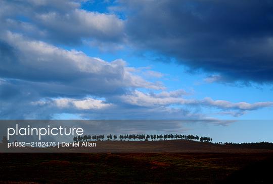 Trees on a Hill - p1082m2182476 by Daniel Allan
