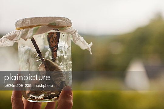 Hand holding Monarch butterfly in jar - p924m2091235 by heshphoto
