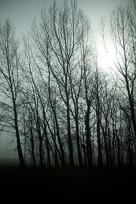 Trees in mist, Normandy, France - p1028m2152856 by Jean Marmeisse