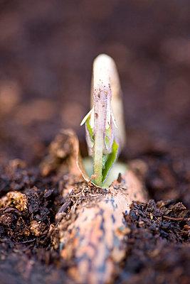 Seedlings - p6691714 by David Harrigan
