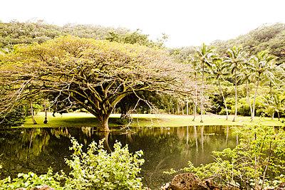 Hawaii - p9070030 by Anna Fritsch