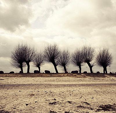 Kahle Weiden am Strand von Boltenhagen - p1162m963170 von Ralf Wilken