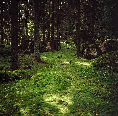 Waldboden - p1418m1571165 von Jan Håkan Dahlström