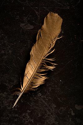 Golden feather - p451m901762 by Anja Weber-Decker