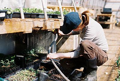 Commercial female flower farmer watering her seedlings with hose - p1166m2268654 by Cavan Images