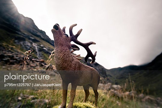 Deer in the Highlands - p795m1225797 by Janklein