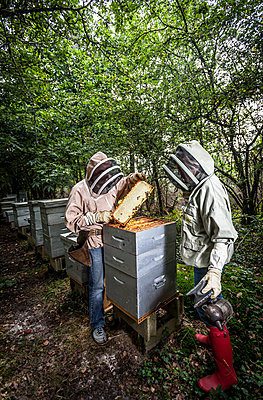 Beekeeper - p1402m1461983 by Jerome Paressant