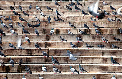 Doves on stairs - p3820270 by Anna Matzen