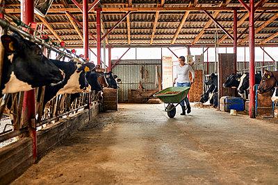 Female farmer carrying hay in wheelbarrow at dairy farm - p300m2199084 by Zeljko Dangubic