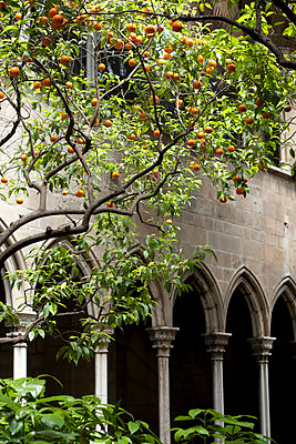 Fruit tree in front of an ancient church in Spain - p304m698210 by R. Wolf