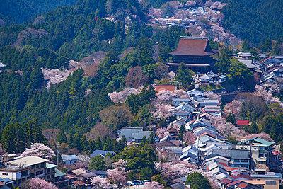 Blooming cherry blossoms at Mount Yoshino, Nara Prefecture, Japan - p307m1495895 by MATSUO.K