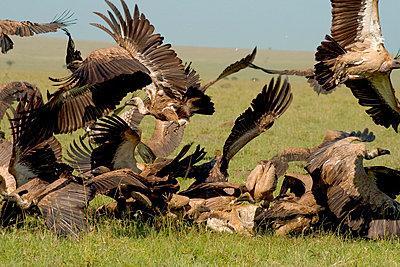 Masai Mara Nationalpark - p5330201 von Böhm Monika