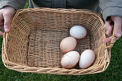 Person holding basket of fresh eggs, cropped - p675m922911 by Marion Barat