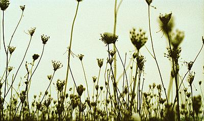 Wiesenblumen - p9791803 von Kosa