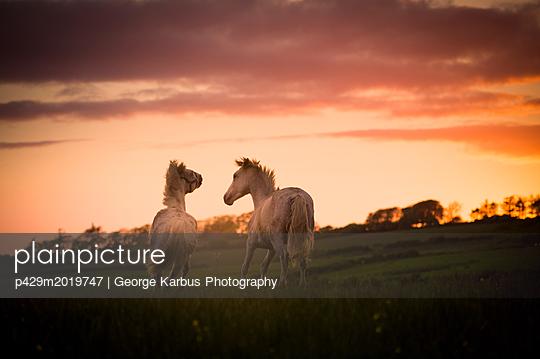 p429m2019747 von George Karbus Photography