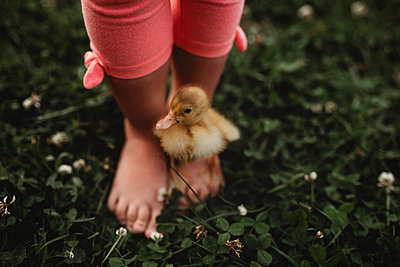 duckling on toddler girl feet in the grass - p1166m2113284 by Cavan Images
