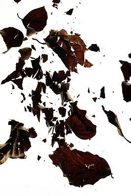 Vertrocknetes Laub  - p450m1040546 von Hanka Steidle