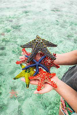Person holding seastar in hands - p930m1541616 by Ignatio Bravo