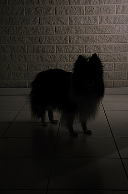 Silhouette eines Hundes - p1235m2214792 von Karoliina Norontaus