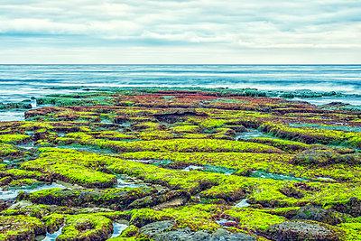 Hospital's Reef, La Jolla, California, USA - p1436m1584105 by Joseph S. Giacalone