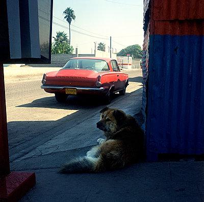Hund ruht sich aus auf einem Gehweg - p1082m2172933 von Daniel Allan