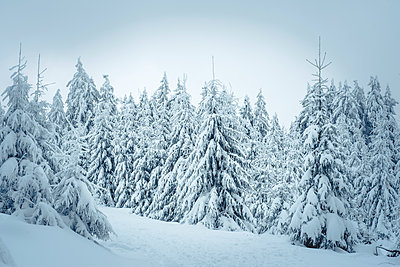 Germany, Hesse, Hochtaunuskreis, Feldberg, Winterlandscape with snow covered trees - p300m1535103 by Ina Peters
