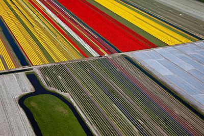 Flowerfields red yellow  - p1120m948337 by Siebe Swart