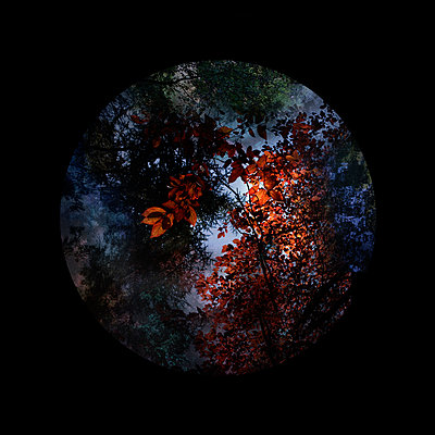 Looking through - p1240m2063365 by Adeline Spengler