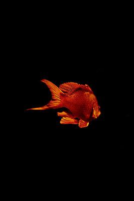 Underwater - p1028m2245000 von Jean Marmeisse
