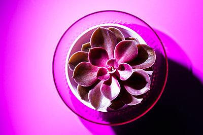 Succulent - p1149m2116622 by Yvonne Röder