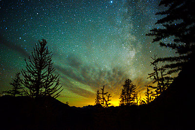 Low angle view of silhouette trees against star field - p1166m1210540 by Cavan Images