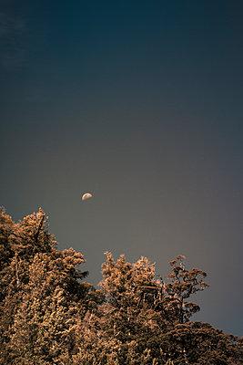Mond am Himmel über einem Wald - p1255m1574971 von Kati Kalkamo