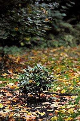 Herbst - p949m902561 von Frauke Schumann