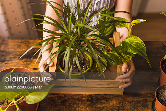 Woman with crate of houseplants standing at table - p300m2290683 by Mar
