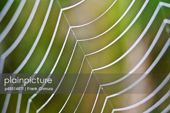 extreme close up of spider web with dew water drops - shallow depth of field - p4551487f by Frank Chmura