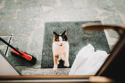 Katze auf zwei Beinen vor Türe - p1497m1585704 von Sascha Jacoby