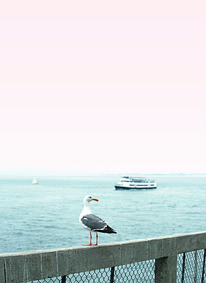 Sea Gull on Sea Railing with Boat in the Distance - p1617m2191620 by Barb McKinney
