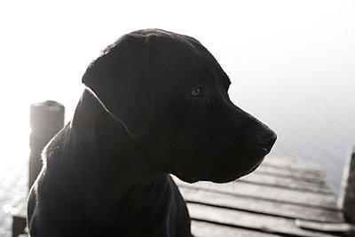 Sad dog - p5560185 by Wehner