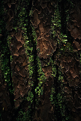 Tree bark - p947m945801 by Cristopher Civitillo