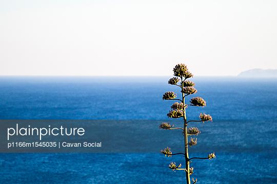 p1166m1545035 von Cavan Social