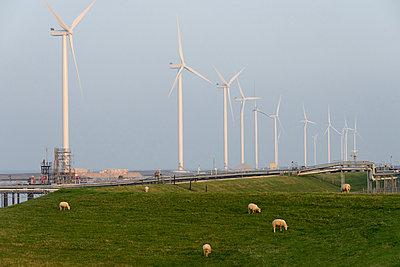 Windpark mit Schafen im Vordergrund - p1079m1137137 von Ulrich Mertens