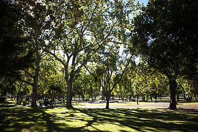 Pleasure ground with deciduous trees in the sunshine - p1640m2258530 by Holly & John