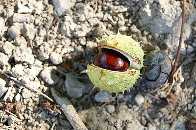 Chestnut - p8850210 by Oliver Brenneisen