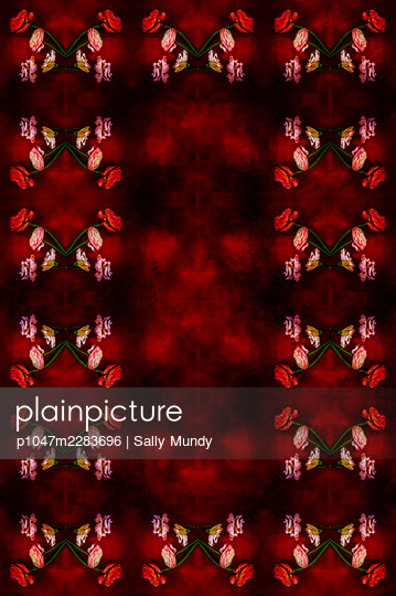 Computer generated abstract repeated pattern using collaged cut flowers on stems on dark red and black background - p1047m2283696 by Sally Mundy