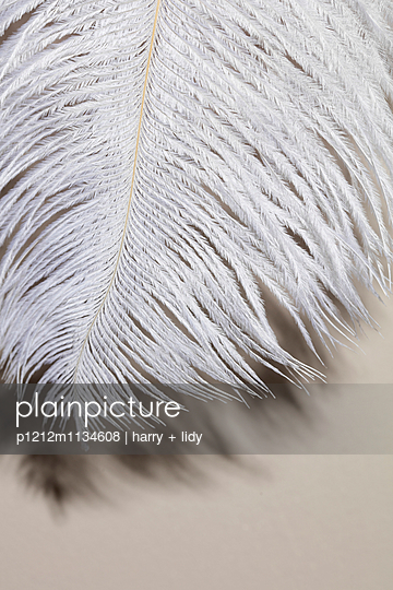 Fringing - p1212m1134608 by harry + lidy