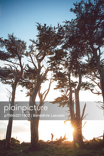 Trees at sunset, Point Reyes National Park - p756m2211802 by Bénédicte Lassalle