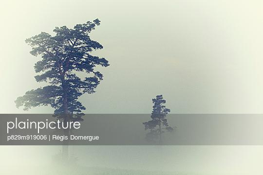 Fog - p829m919006 by Régis Domergue