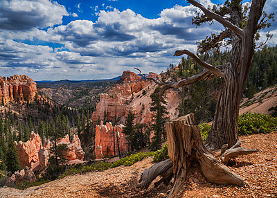 Bryce Canyon - p1154m1138531 by Tom Hogan