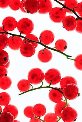 Rote Johannisbeeren     - p450m1042335 von Hanka Steidle
